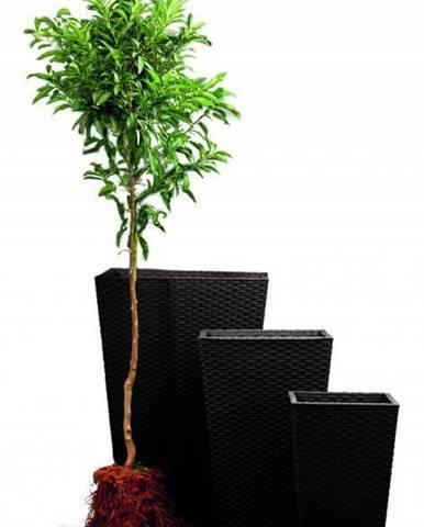 ArtRoja Rattan planter M - hnedá